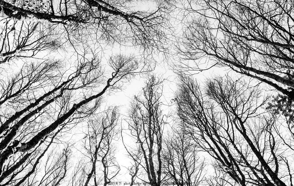 森林 仰拍 树林 树木 枯树 树干 枯枝 树枝 仰视图 树林风景 自然风光
