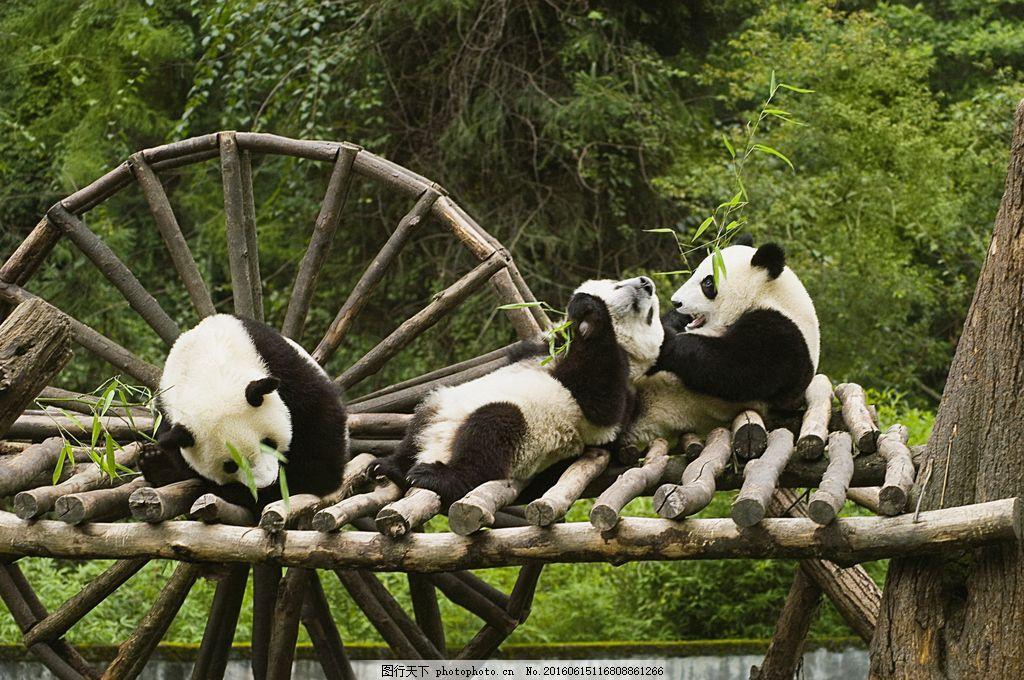 动物园熊猫图片
