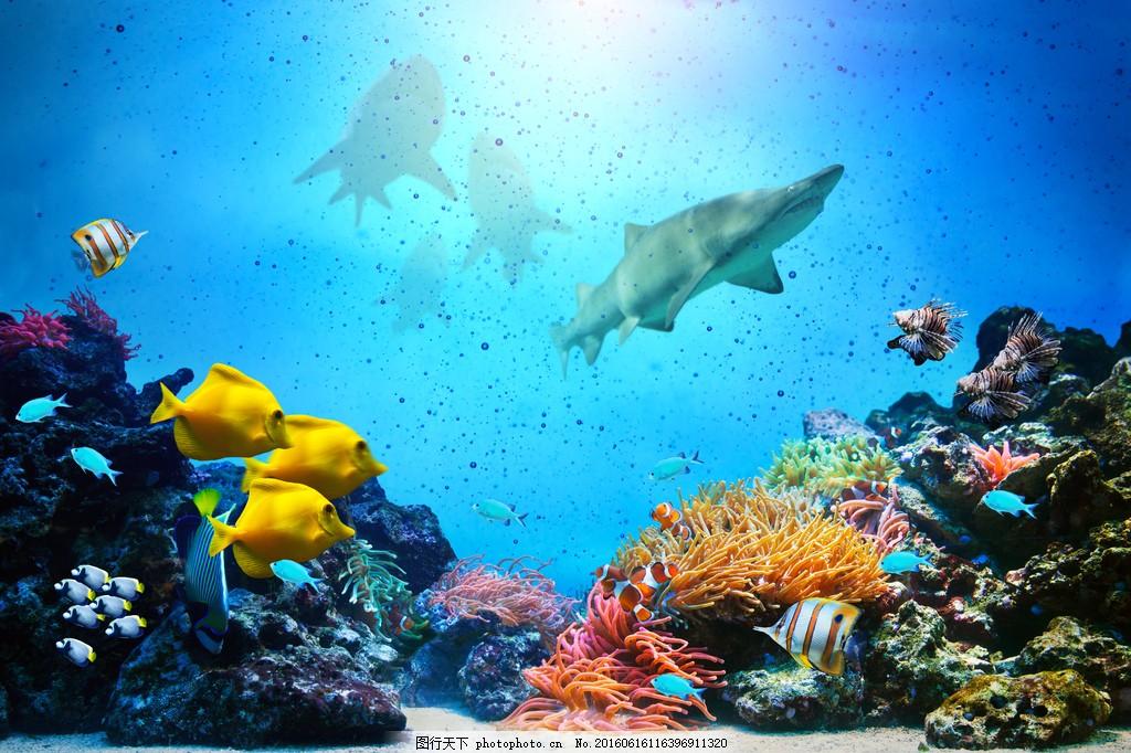 設計圖庫 高清素材 自然風景  海底高清圖片下載 魚類 漂亮 大海 海魚