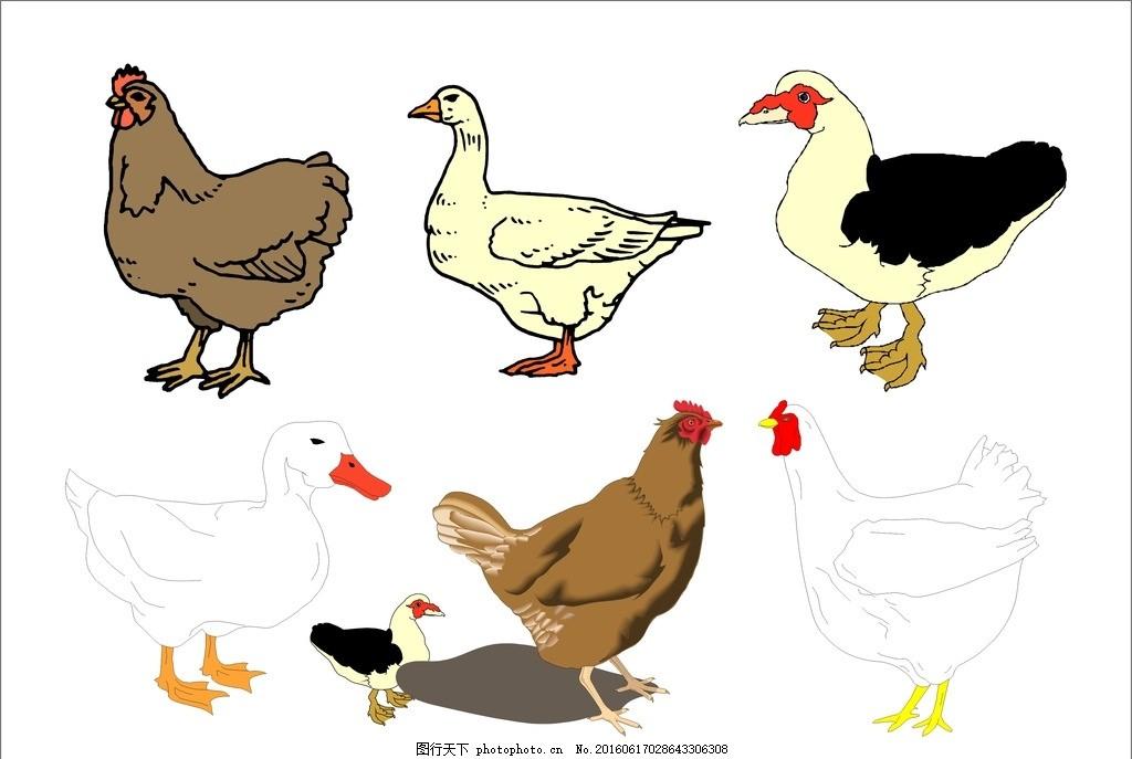 彩绘公鸡 手绘公鸡 家禽 可爱公鸡 彩色公鸡 功夫鸡 鸡鸣 插画小鸡