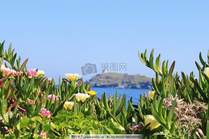 环境优美的海边景色 春天 花朵 花卉 树叶     红色 jpg