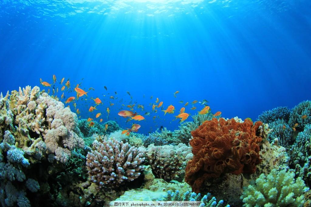高清绚丽海底世界 海洋风景 大海景观 海底世界 海水 珊瑚 礁石 海草