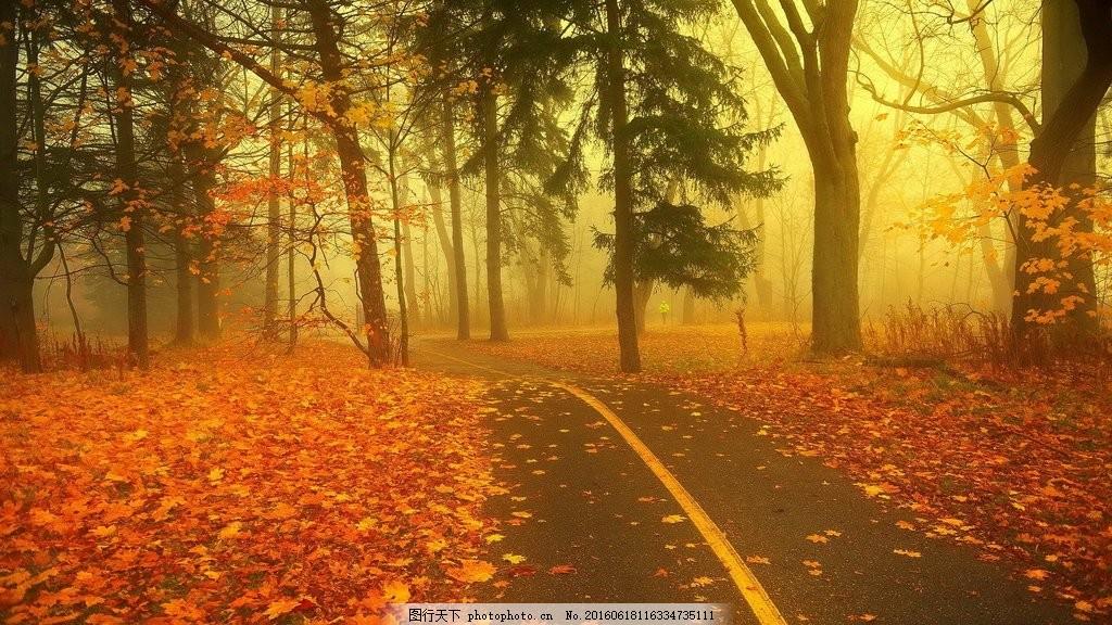 高清秋天落叶风景图片