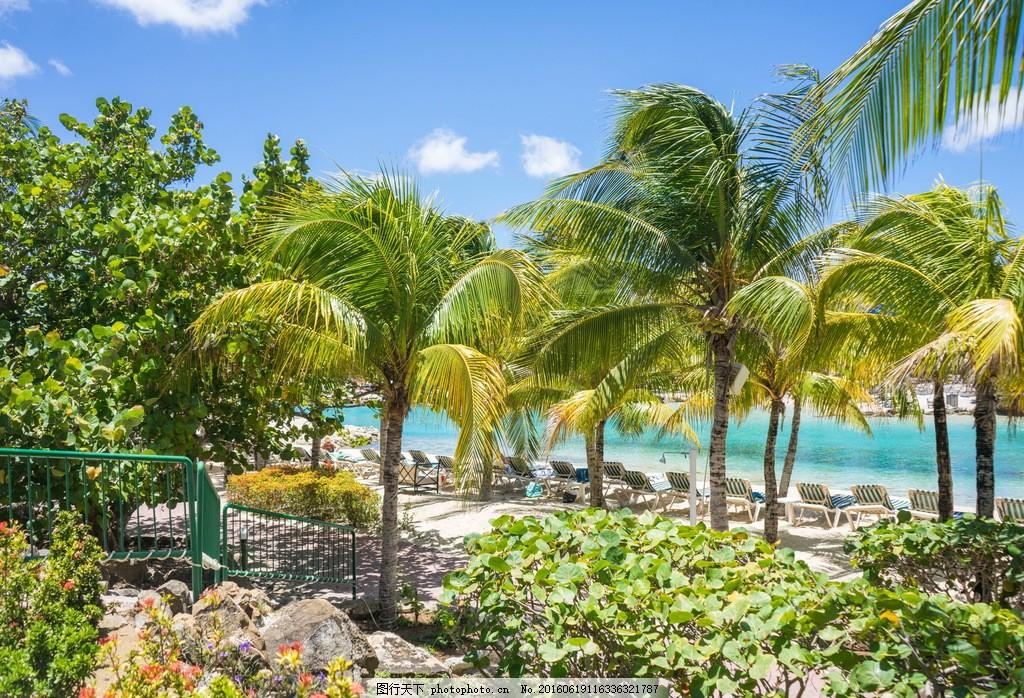 海边棕榈树风景 海边棕榈树风景高清图片下载棕榈树 加勒比海 热带