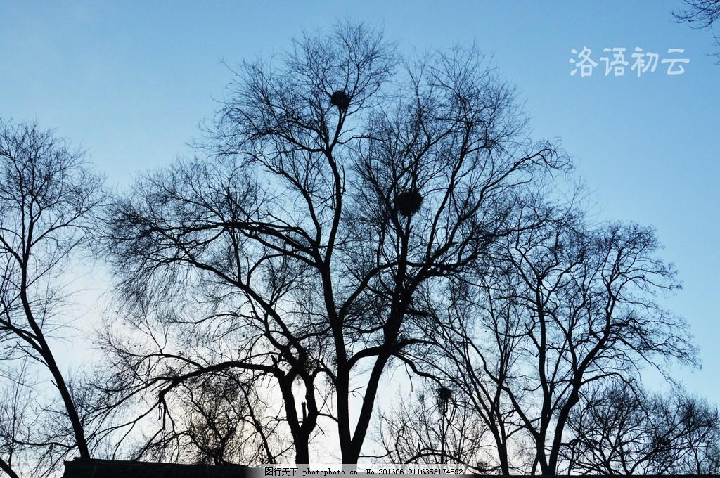 高清黑色树干图片素材下载 树木 树干 一棵树 唯美的树 鸟窝