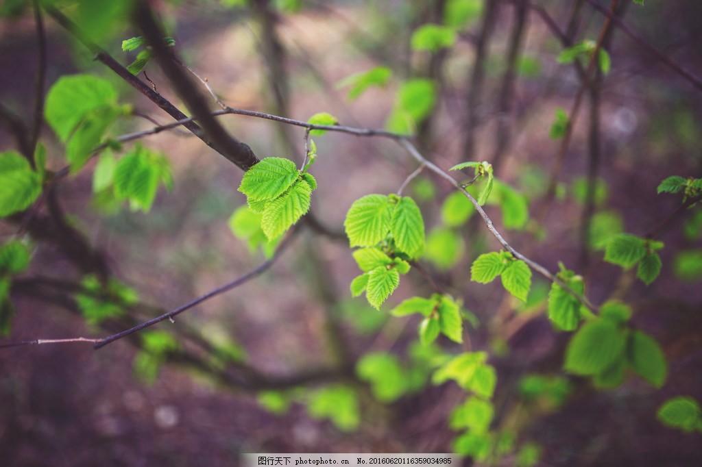 清新树叶风景图片素材下载 绿色 文艺 小清新 绿叶 叶子图片