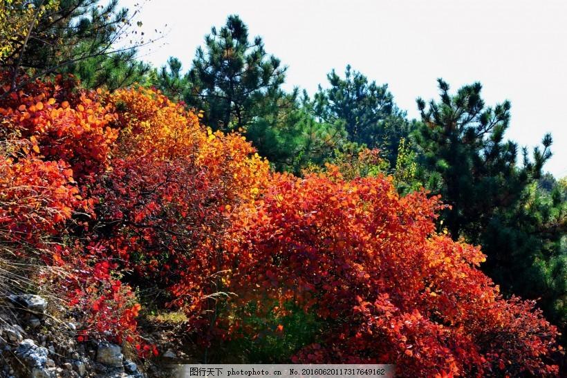 山西陵川红叶风景