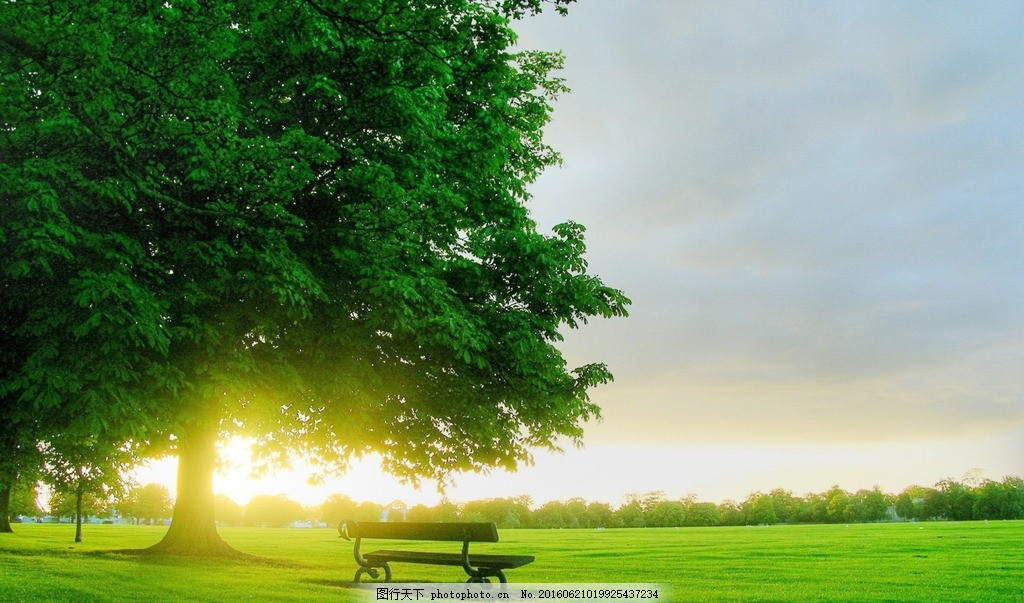 树下夕阳 草地 大树 椅子 凳子 阳光 自然风景 摄影 自然景观 自然