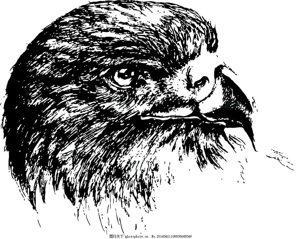 素描写实动物猫头鹰