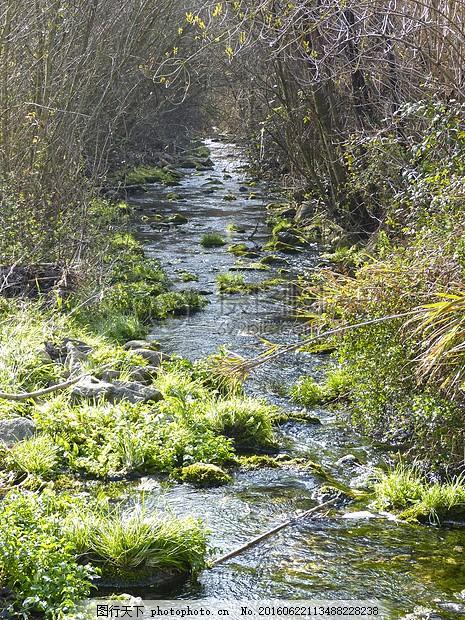 野外森林里的小溪