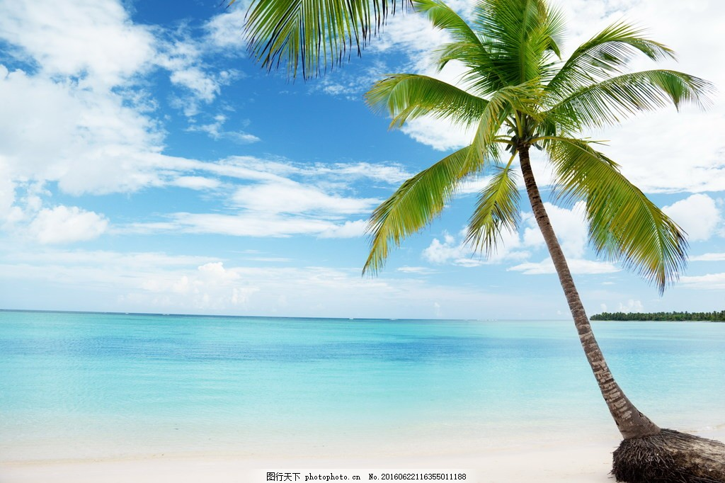 唯美海边椰子树风景图片
