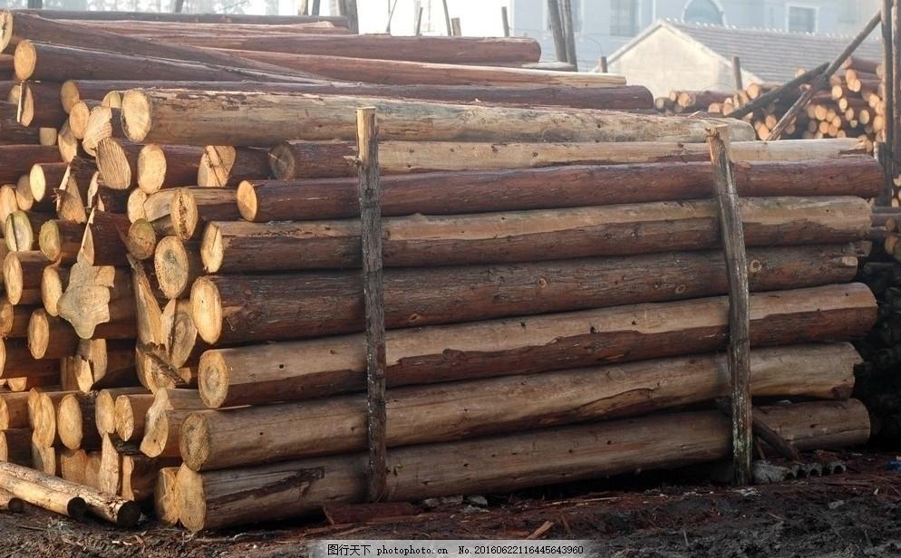 圆木 小木材 木 木头 树木 木材 截面 横截面 横断 横断面 横切 横切面 木料 建筑 建筑木料 原木 原材料 建材 小园木 伐木 砍伐 砍树 乱砍乱伐 滥采 滥伐 森林 树林 植被 其他 图片素材 摄影图库 72DPI JPG 生物世界 树木树叶 盛大开业 农业生产 现代科技 摄影 300DPI