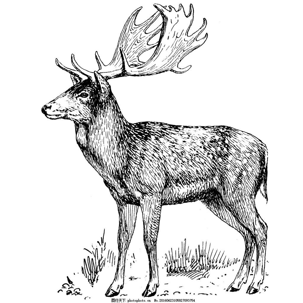 t恤图案 动物 服装图案 鹿 位图 野生动物 鹿头 素描绘画 印花t恤