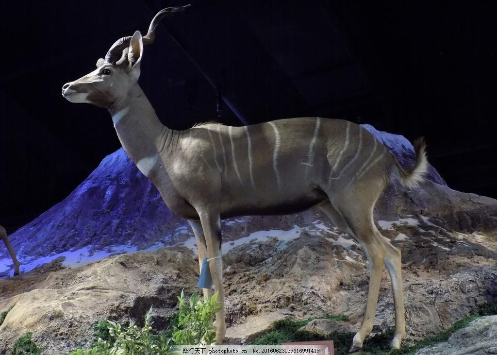 小林羚 仿真雕塑 摄影 动物 博物馆 展厅 艺术雕塑作品 摄影 建筑园林