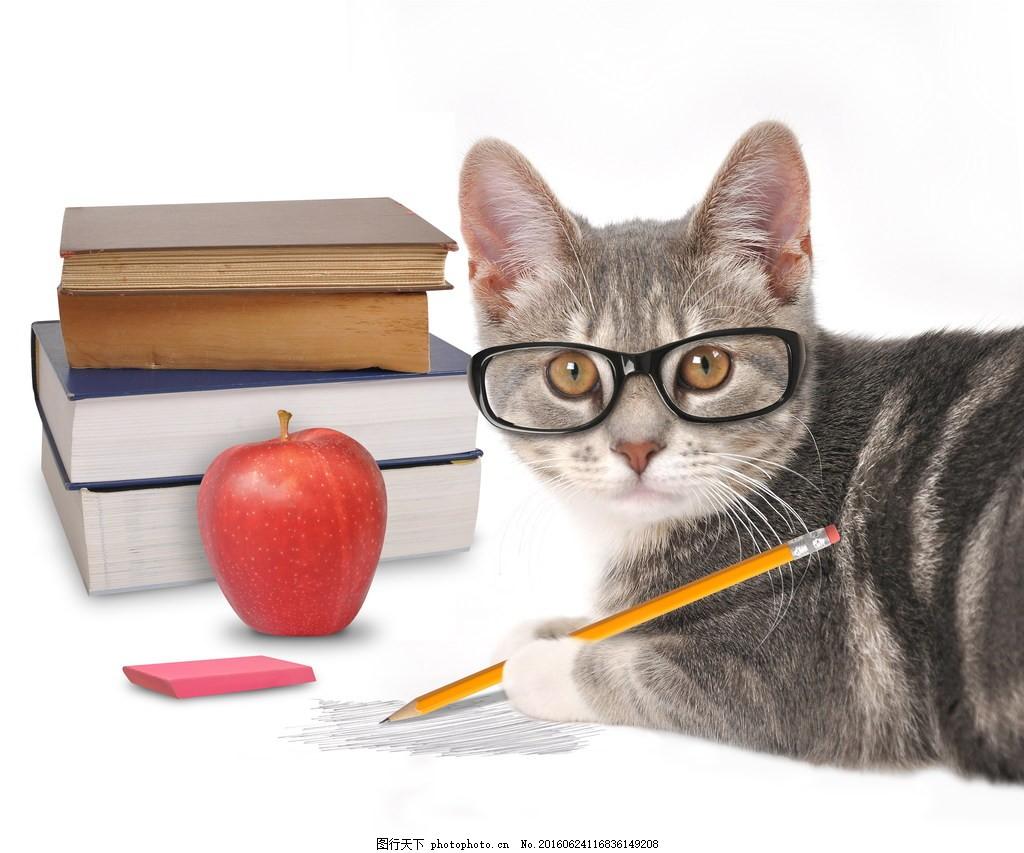 戴眼镜的猫图片,猫咪戴眼镜学习的可爱高清图片下载