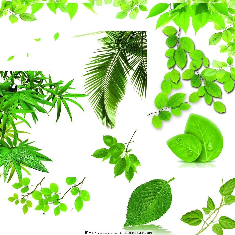 叶子 绿色的叶子 绿叶 装饰边框 边框素材 花纹 背景 画框