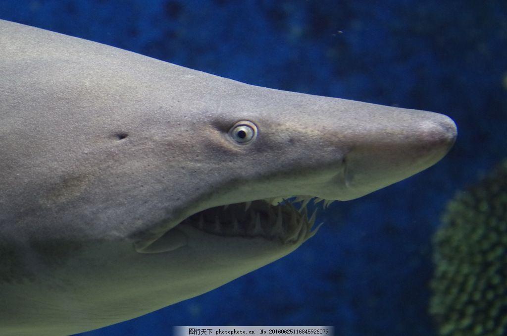 海底大白鲨图片