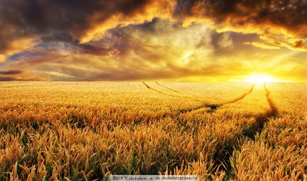 秦皇岛农田 唯美 风景 风光 旅行 自然 田野 夕阳 落日 日落