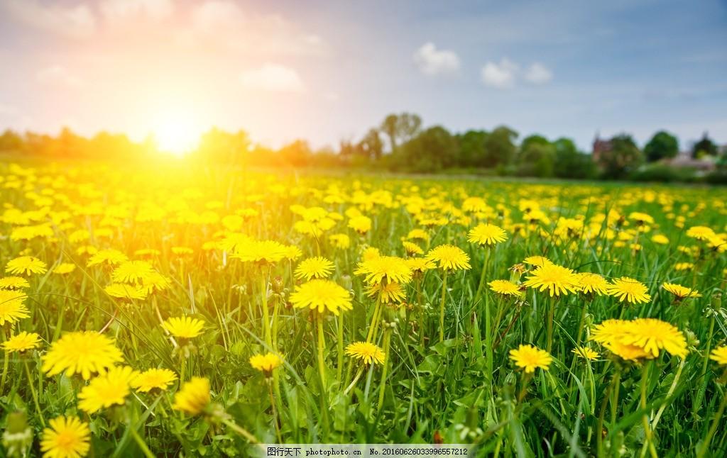 唯美 风景 风光 旅行 自然 秦皇岛 公园 奥林匹克公园 花海 黄菊 摄影