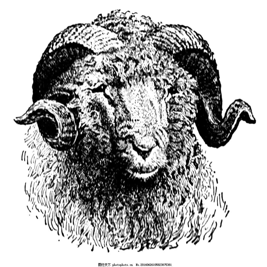 素描绘画黑白绵羊 动物 服装图案 山羊 位图 野生动物 鹿头 动物服装