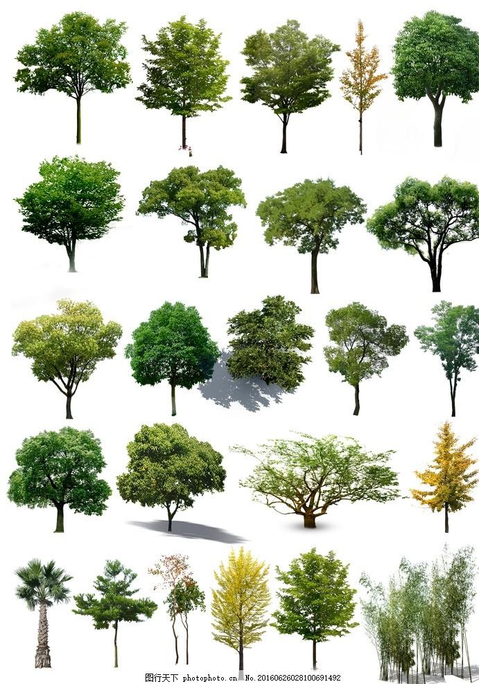 素材 树 单个 景观 效果图图