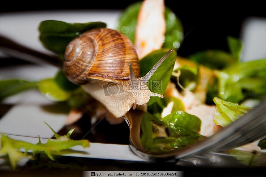 软体动物蜗牛