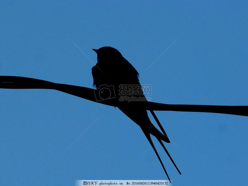 电线杆上的小鸟