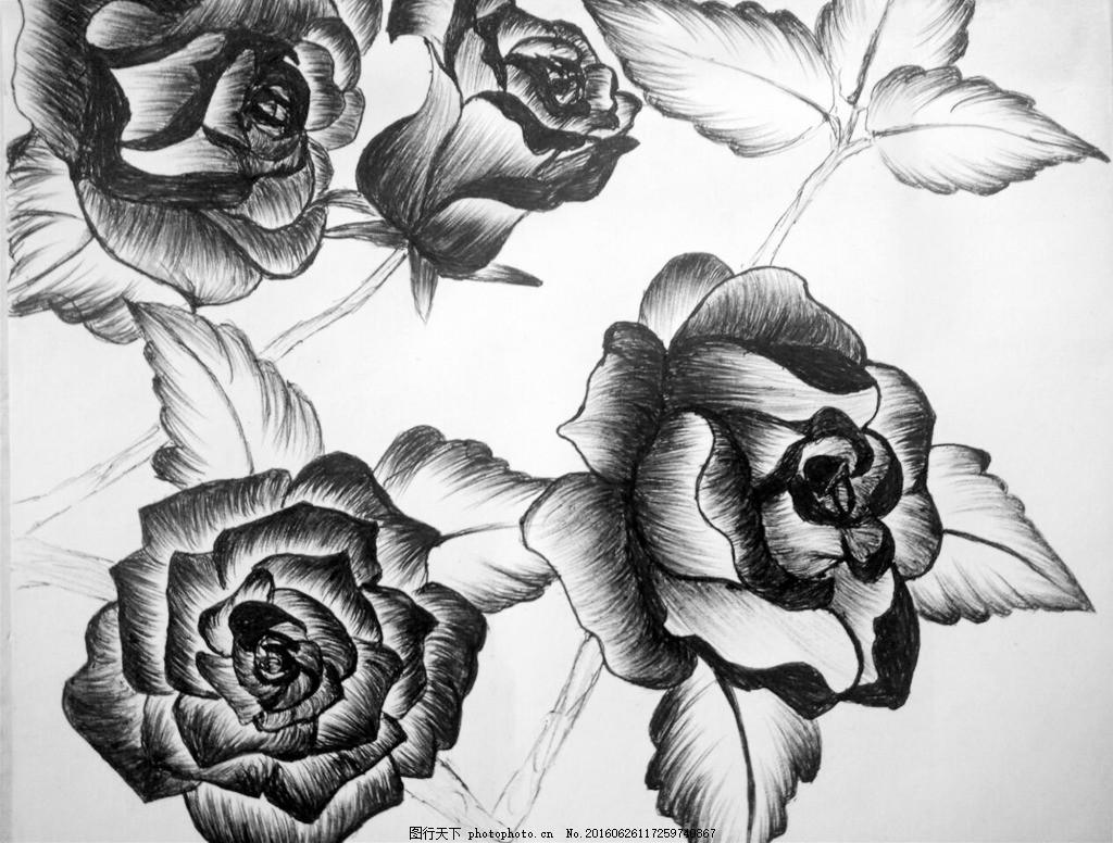 手绘玫瑰花素描插画 素描 手绘 玫瑰花 插画 线描花朵 花枝 花瓣