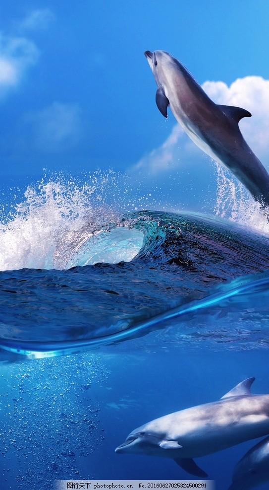 飞跃的鲸鱼 动物 大海 跳跃 蓝天 素材天下 摄影