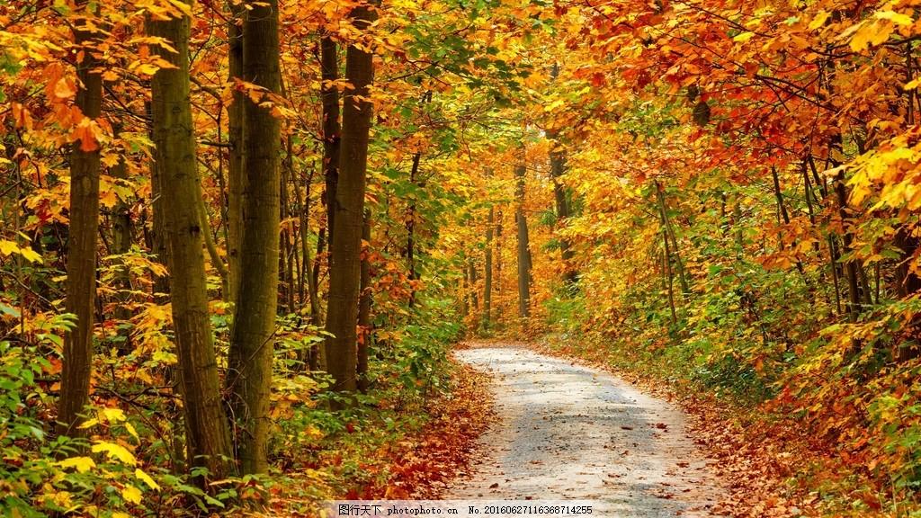 唯美秋天树林风景图片