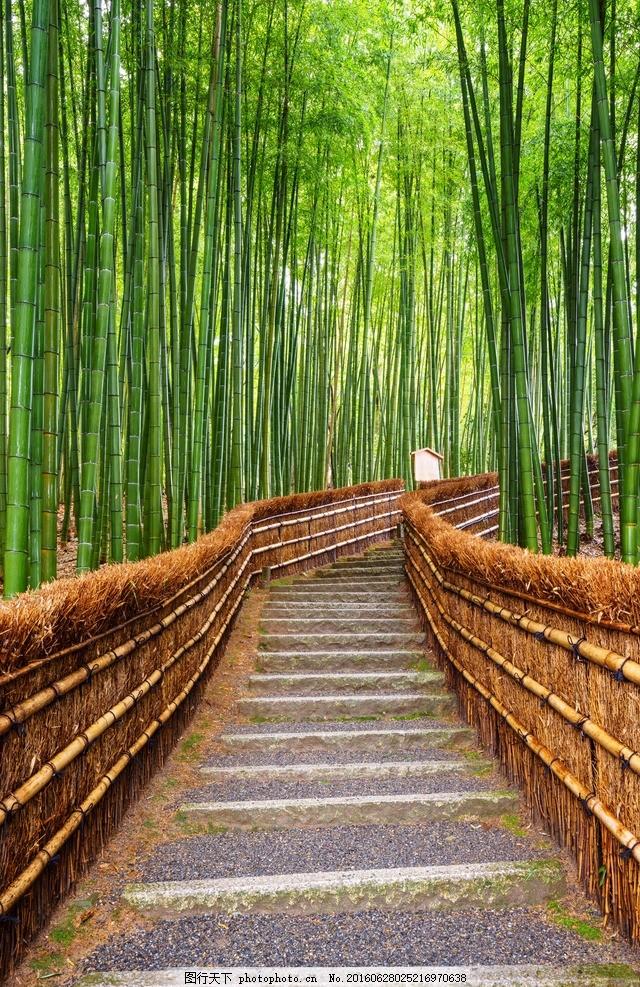 竹子 竹节 绿叶 绿色 竹林 树叶 叶子 竹叶 清水 诗意 竹子 摄影 生物