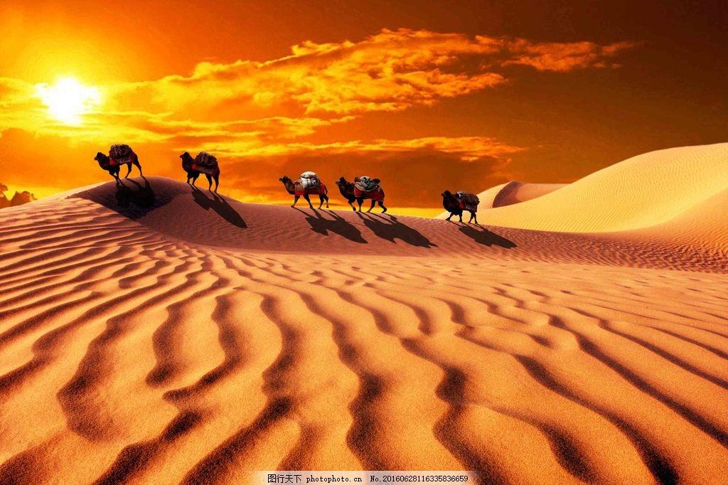 沙漠骆驼黄昏风景图片