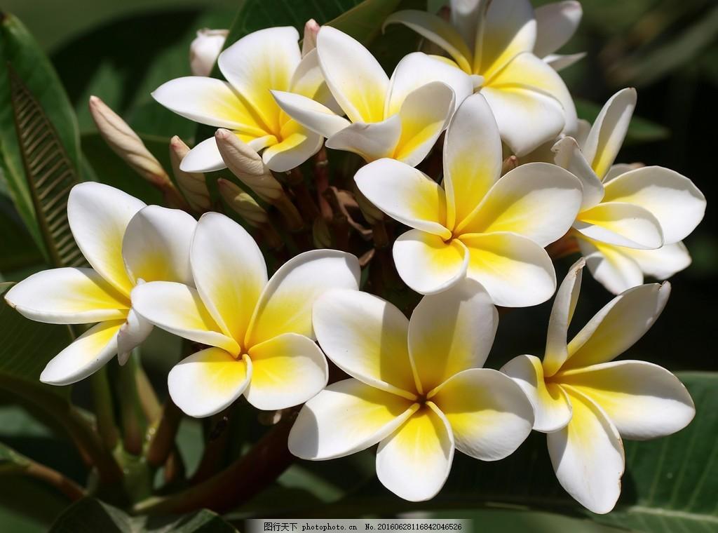 植物图片大全大图唯美相关图片展示_植物图片大全大图唯美图片下载图片