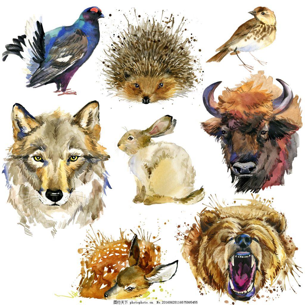 动物头像水彩画高清图
