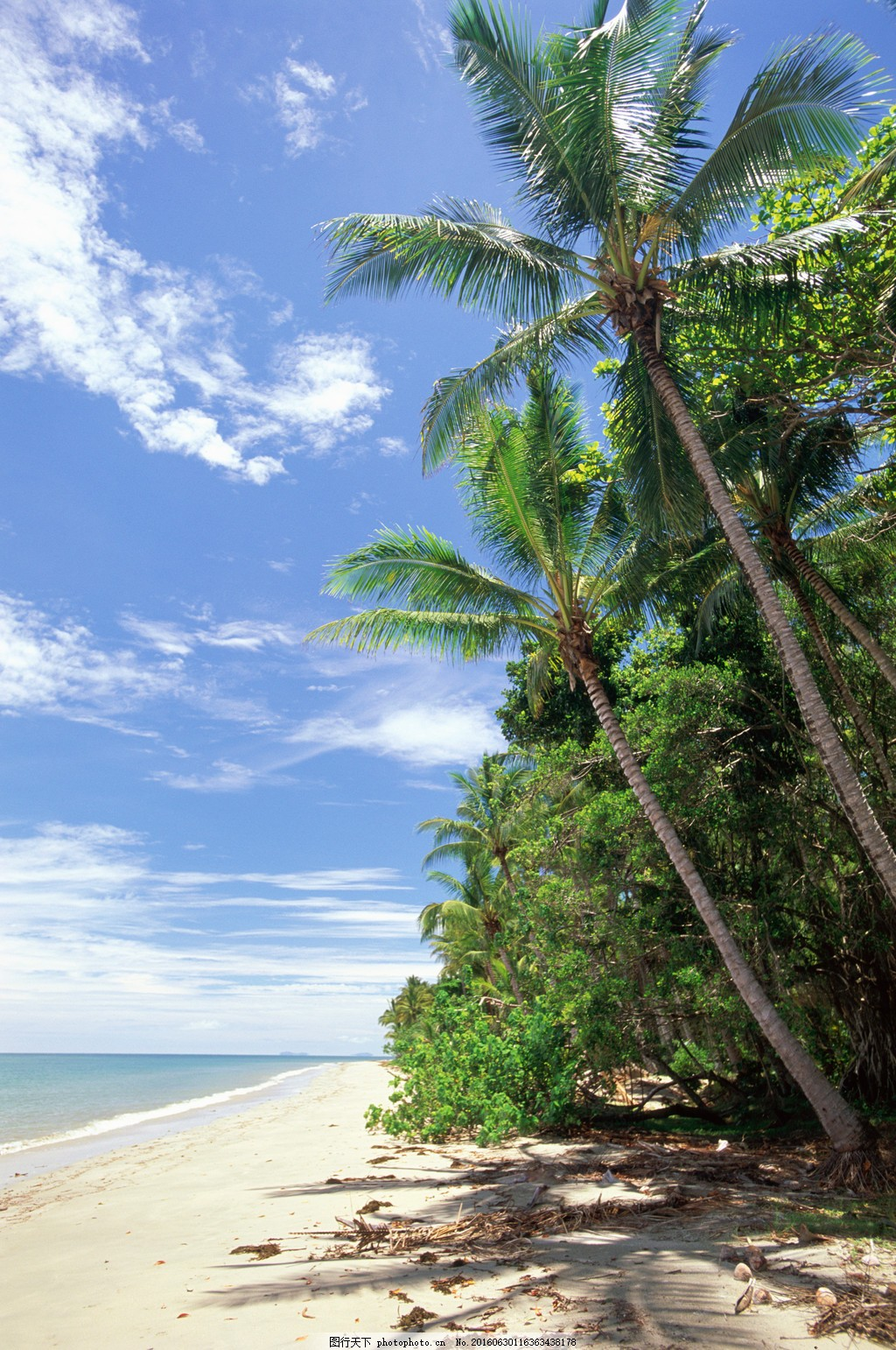 海南椰子树风景图片