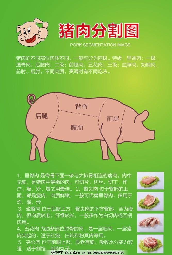 猪肉分割图,土猪,土猪肉,农家土猪,猪肉广告,黑猪肉,肉店